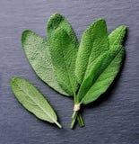 Λογικά φύλλα Στοκ φωτογραφία με δικαίωμα ελεύθερης χρήσης