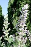 Λογική floral ακίδα μεντών με τα πέταλα ανοιχτό lavender και το λευκό Στοκ Εικόνες