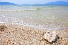 λογικό κοχύλι θάλασσας στοκ εικόνες