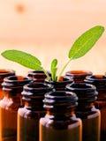 Λογικό ουσιαστικό πετρέλαιο Natural Spa συστατικών για aromatherapy με Στοκ εικόνες με δικαίωμα ελεύθερης χρήσης
