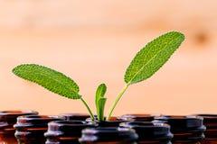 Λογικό ουσιαστικό πετρέλαιο Natural Spa συστατικών για aromatherapy με Στοκ Εικόνες