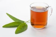 Λογικό τσάι Στοκ φωτογραφία με δικαίωμα ελεύθερης χρήσης
