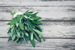 λογικό salvia officinalis πεδίων Λογικά φύλλα στον παλαιό ξύλινο πίνακα Φασκομηλιά κήπων χειροποίητη δαντέλλα Αναδρομική εικόνα π Στοκ Εικόνες