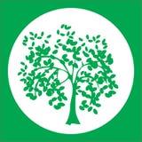 Λογότυπο με τις ελιές στον κύκλο Στοκ Εικόνες