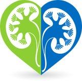Λογότυπο νεφρών Στοκ Φωτογραφίες