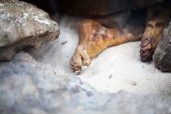 ΛΟΝΔΙΝΟ, UK, άτομο Gebelein - μια από τις καλύτερα συντηρημένες μούμιες Στοκ φωτογραφία με δικαίωμα ελεύθερης χρήσης