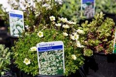 Λονδίνο, Ηνωμένο Βασίλειο - 17 Απριλίου 2015: Αγορά της Κυριακής οδικών λουλουδιών της Κολούμπια Οι έμποροι οδών πωλούν το απόθεμ Στοκ Φωτογραφία