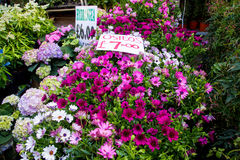 Λονδίνο, Ηνωμένο Βασίλειο - 17 Απριλίου 2015: Αγορά της Κυριακής οδικών λουλουδιών της Κολούμπια Οι έμποροι οδών πωλούν το απόθεμ Στοκ εικόνα με δικαίωμα ελεύθερης χρήσης