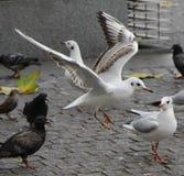 Λονδίνο 10 Στοκ φωτογραφίες με δικαίωμα ελεύθερης χρήσης