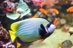 Λονδίνο Aquarian Στοκ Εικόνες