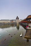 Λουκέρνη, Ελβετία - 24 Οκτωβρίου 2016: Κύκνοι και Seagull στη λίμνη Λουκέρνη στοκ φωτογραφία