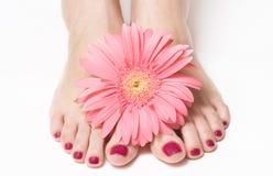 λουλουδιών πόδια ροζ μα& Στοκ Φωτογραφία