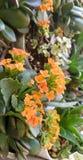 Αγορές λουλουδιών στοκ εικόνες με δικαίωμα ελεύθερης χρήσης