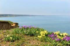 Λουλούδια άγρια περιοχές ίριδων Σπάνια λουλούδια τομέων που απαριθμούνται στο κόκκινο βιβλίο Στοκ Εικόνα