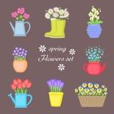 Λουλούδια άνοιξη καθορισμένα Ανθοδέσμη των λουλουδιών που φυτεύονται στα διαφορετικά δοχεία Στοκ φωτογραφία με δικαίωμα ελεύθερης χρήσης