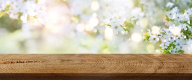 Λουλούδια άνοιξη σε ένα πάρκο με τον αγροτικό ξύλινο πίνακα Στοκ Φωτογραφίες