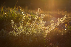 Λουλούδια άνοιξη στην ανατολή Στοκ Εικόνες