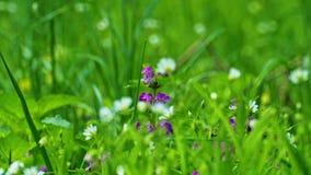 Λουλούδια άνοιξη στην παχιά χλόη φιλμ μικρού μήκους