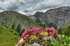 Λουλούδια άνοιξη Kamchatka Λουλούδια και λάβα του ηφαιστείου Κοιλάδα Geysers Επιφύλαξη κρατικής φύσης Kronotsky kamchatka στοκ φωτογραφία με δικαίωμα ελεύθερης χρήσης