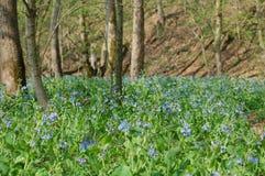 Λουλούδια αέρα στο δάσος Στοκ φωτογραφίες με δικαίωμα ελεύθερης χρήσης