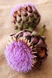 λουλούδια αγκιναρών στοκ φωτογραφία με δικαίωμα ελεύθερης χρήσης