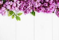 Λουλούδια ακακιών άνοιξη στοκ φωτογραφίες με δικαίωμα ελεύθερης χρήσης