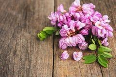 Λουλούδια ακακιών άνοιξη στοκ φωτογραφία με δικαίωμα ελεύθερης χρήσης