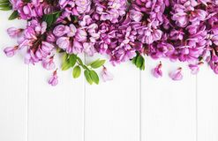 Λουλούδια ακακιών άνοιξη στοκ εικόνες με δικαίωμα ελεύθερης χρήσης