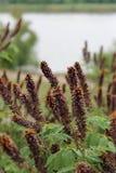 Λουλούδια ακακιών Ιώδη λουλούδια στοκ φωτογραφίες με δικαίωμα ελεύθερης χρήσης