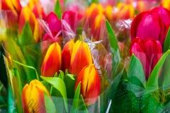 Λουλούδια, ανθοδέσμη τουλιπών στοκ εικόνες με δικαίωμα ελεύθερης χρήσης