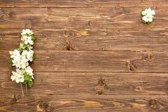 Λουλούδια ανθών δέντρων της Apple στο αγροτικό ξύλινο υπόβαθρο με το διάστημα αντιγράφων Στοκ εικόνα με δικαίωμα ελεύθερης χρήσης