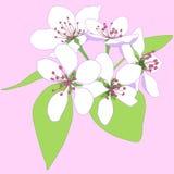 λουλούδια ανθών Στοκ Εικόνες