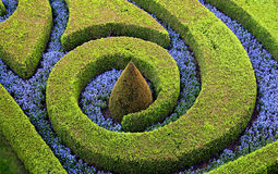 λουλούδια αποκοπών θάμν&om Στοκ Εικόνα