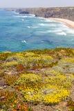 Λουλούδια, απότομοι βράχοι, παραλία και κύματα σε Arrifana Στοκ εικόνα με δικαίωμα ελεύθερης χρήσης