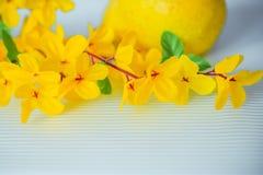 Λουλούδια από τα τεχνητά ελαφριά λουλούδια ακακιών υλικών κίτρινα, κίτρινα στοκ φωτογραφίες