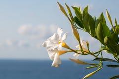 Λουλούδια από τη θάλασσα, άποψη του dellÃsola Παναγίας στοκ εικόνες
