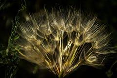 Λουλούδια από τον κήπο μου Λεπτομέρειες ομορφιάς στοκ εικόνες