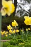 λουλούδια αρκετά Στοκ φωτογραφίες με δικαίωμα ελεύθερης χρήσης