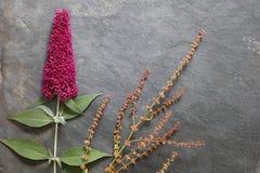 Λουλούδια αρχών του καλοκαιριού στο κατασκευασμένο υπόβαθρο πλακών στοκ φωτογραφίες