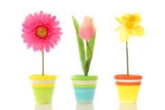 λουλούδια αστεία Στοκ φωτογραφίες με δικαίωμα ελεύθερης χρήσης