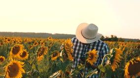 λουλούδια ατόμων γεωπόνων osamatrivaet και σπόροι ηλίανθων Ο επιχειρηματίας με την ταμπλέτα εξετάζει τον τομέα του με τους ηλίανθ απόθεμα βίντεο