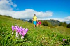 Λουλούδια βουνών με την οικογένεια σε ένα πεζοπορώ Στοκ Φωτογραφία