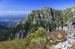 Λουλούδια βουνών στο καλοκαίρι με την αιχμή βουνών στο υπόβαθρο Στοκ φωτογραφία με δικαίωμα ελεύθερης χρήσης