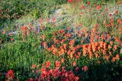 Λουλούδια βουνών στο υποστήριγμα Άγιος Helens στοκ φωτογραφίες
