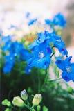 Λουλούδια βρεφικών σταθμών φλαμίγκο στοκ εικόνα