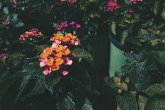 Λουλούδια βρεφικών σταθμών φλαμίγκο στοκ φωτογραφίες