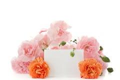 Λουλούδια γαρίφαλων στοκ εικόνες