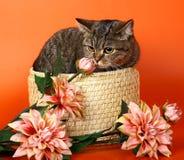 λουλούδια γατών καλαθ&io Στοκ φωτογραφίες με δικαίωμα ελεύθερης χρήσης