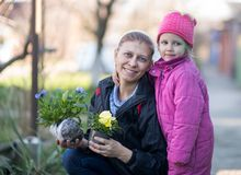 Λουλούδια γυναικών και εγκαταστάσεων παιδιών του viola στοκ φωτογραφία