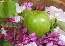 Λουλούδια δέντρων της Apple άσπρα και πορφυρά με τα φύλλα και το πράσινο ώριμο μήλο Στοκ Εικόνες
